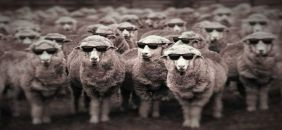 CMB sheep teaser